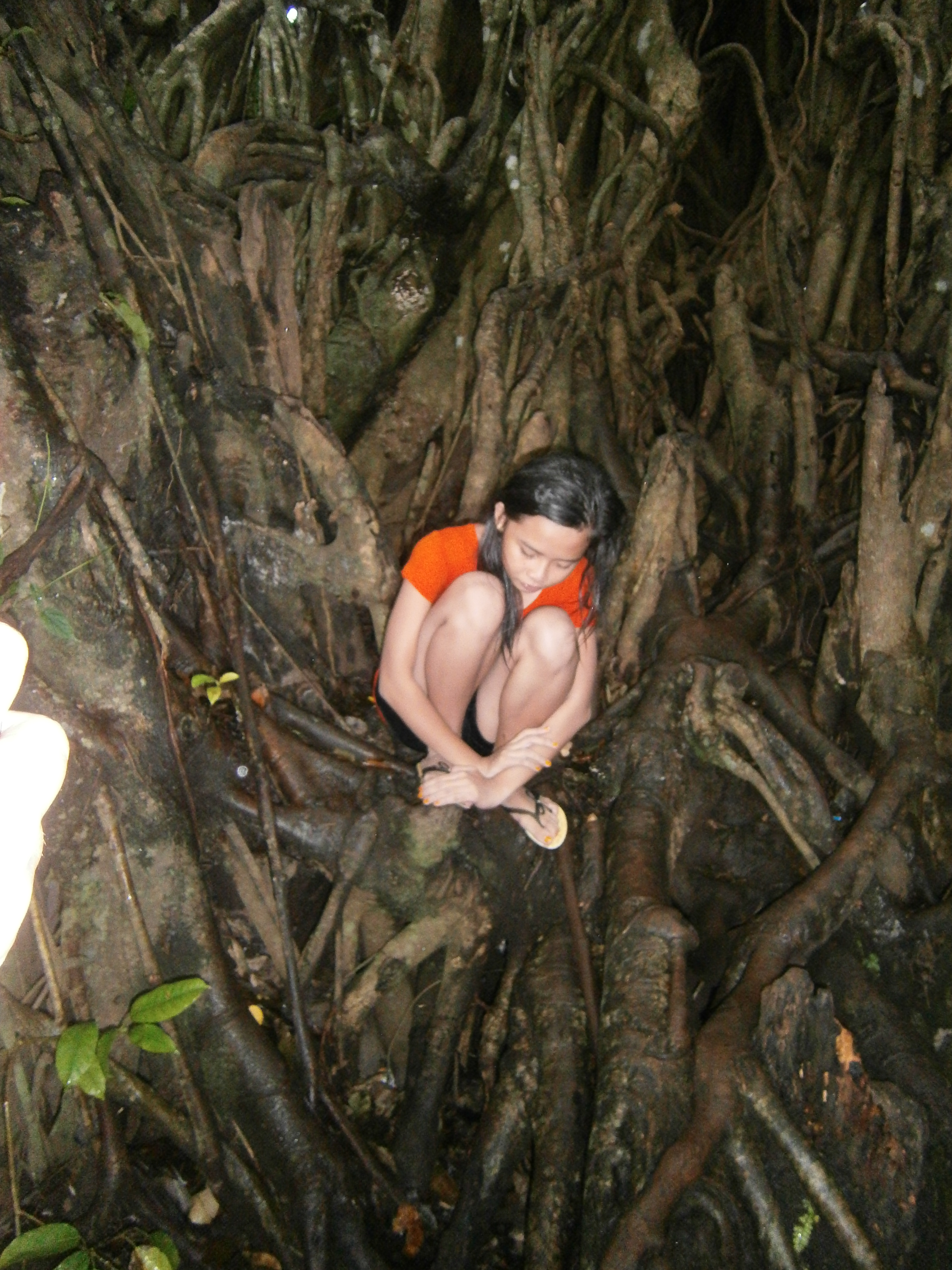 Balete Tree Drawing The Tree Which Was Carbon